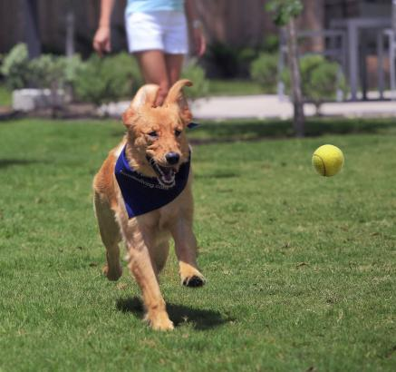 Dog Park at Camden La Frontera Apartments in Round Rock, Texas