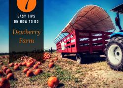 Dewberry Farm in Houston texas