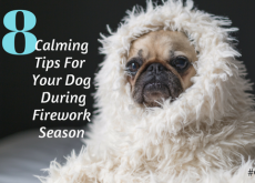 8 Calming Tips For Your Dog During Firework Season