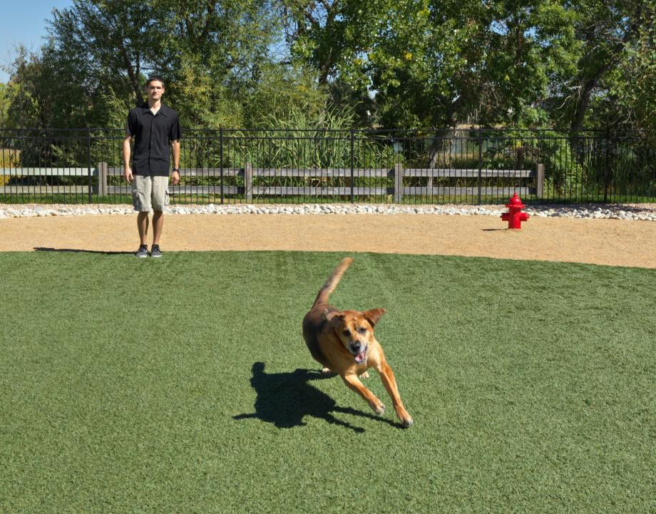 Dog Park Near Mw